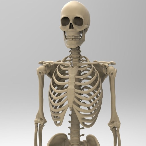 Skeletal System Anatomy