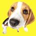 50.Beagle Emoji Stickers