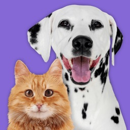 Pet Parade: Cutest Dogs & Cats