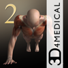 3D4Medical from Elsevier - iMuscle 2 - iPhone Edition artwork