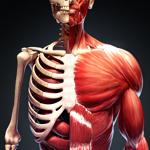 Анатомия Человека AR на пк