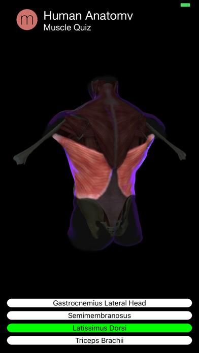 Muscle Quiz Screenshot 5