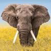Wildlife Wallpaper Weather - iPhoneアプリ