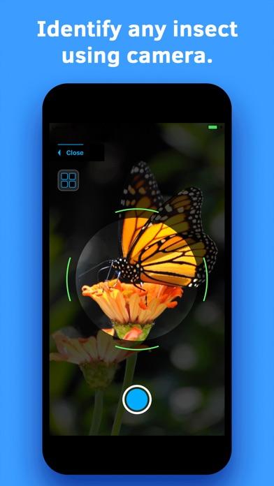 Insect Identification screenshot 1