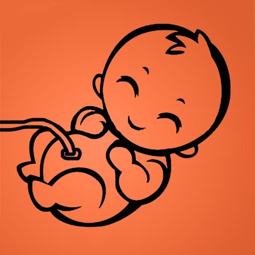 graviditet dag for dag