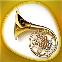 Animals 360 Instruments Gold
