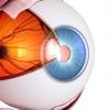 THE眼球トレーニング〜見るだけ動体視力アップ〜