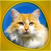 Animals 360 - Cats Gold