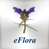 Tom Tallak Solbu - eFlora artwork