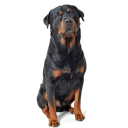 Rottweiler Dog Sounds & Barking App
