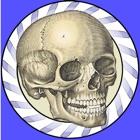 Speed Bones MD icon