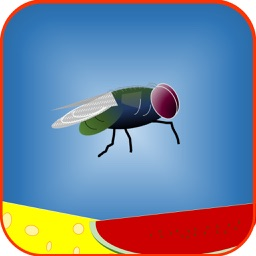 Fly-the-Fly