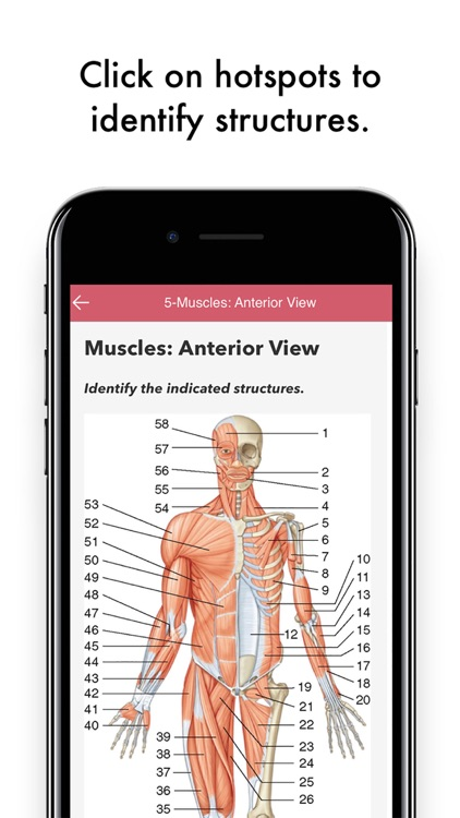 Grays Anatomy Flash Cards Hot Spots And Qa By Skyscape Medpresso Inc