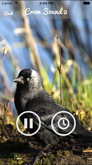 Crow Sounds – Crow Call Sound on the App Store