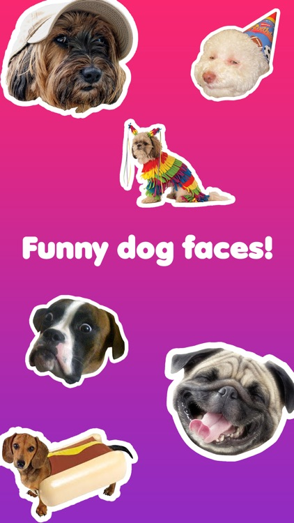 Dog Face - Funny Dog Memes and Faces
