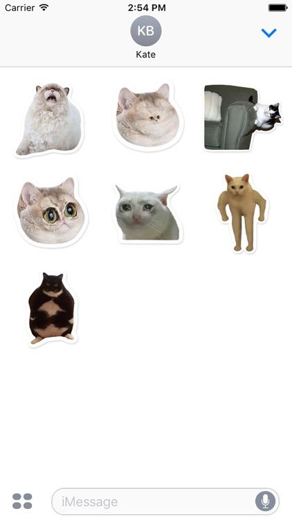 Elite Cats