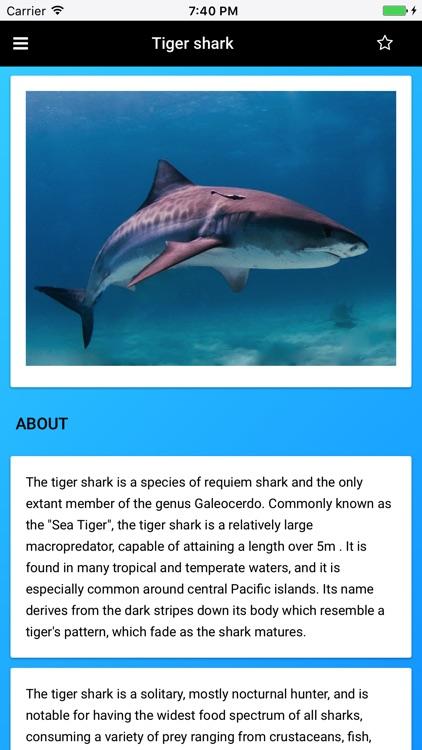 Shark Species: Hunters of the Deep