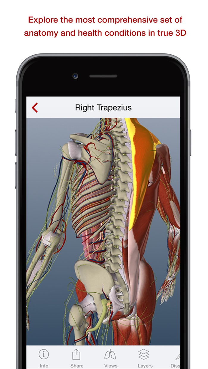 BioDigital 3D Human Anatomy Screenshot