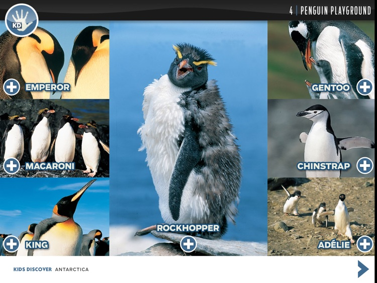 Antarctica by KIDS DISCOVER screenshot-3