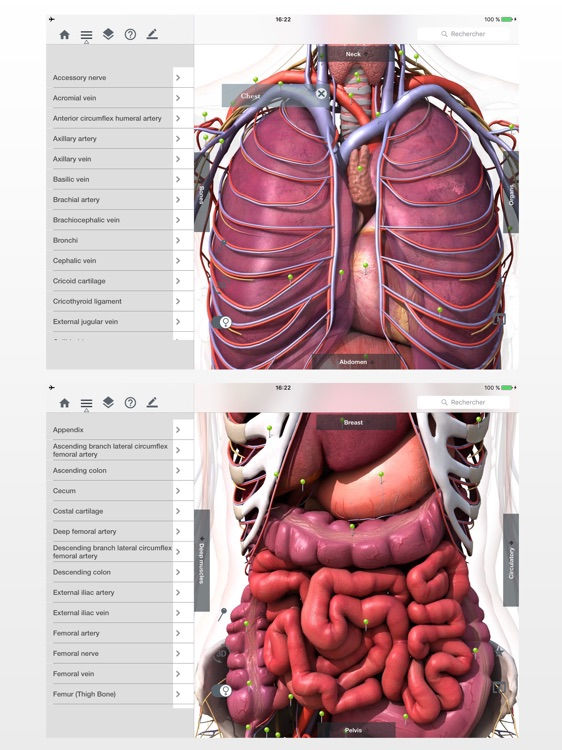 Anatomy Easy : Learn Muscles, Skeleton and Bones screenshot-3