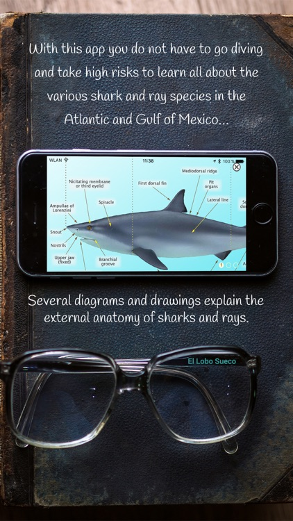 Sharks & Rays of the Atlantic and Gulf of Mexico