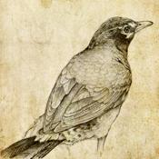 Sketch Master app review