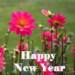 Amazing New Year Greetings & eCards
