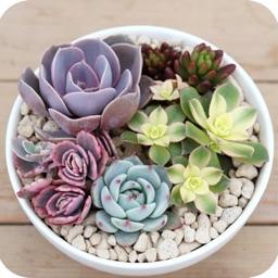 Succulent Album - Help You Know Succulents