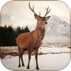 Deer Calls & Sounds lite - Hunter Calls iphone and android app