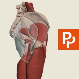 Hip: 3D Real-time Human Anatomy