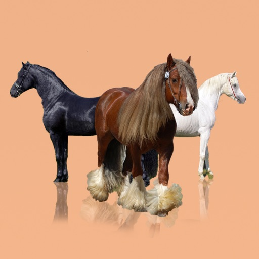 Horse Breeds: A Bible of Horses