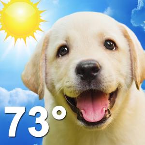 Weather Puppy Weather app