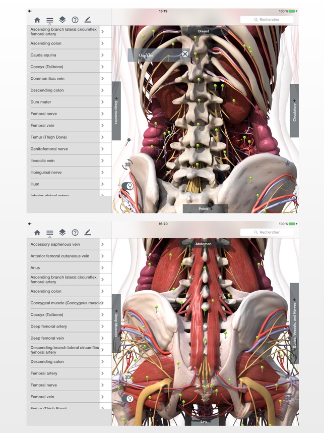 Fantástico Etiquetado Anatomía Y Fisiología Colección de Imágenes ...
