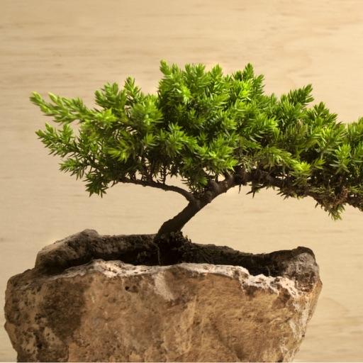 Bonsai for Beginners - How to Start a Bonsai Tree