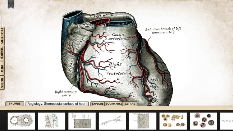 Gray's Anatomy Premium Edition screenshot-4