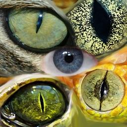 Baby & Animal Vision