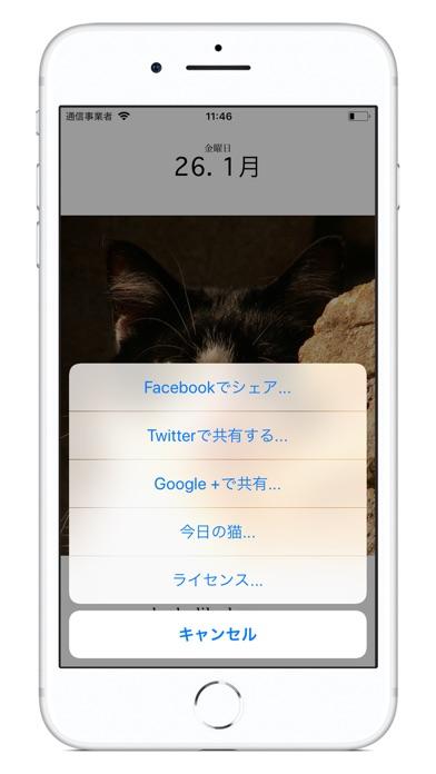 猫のカレンダー2018 ScreenShot2