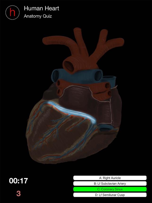 Human Heart Anatomy Quiz on the App Store