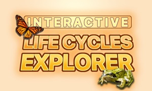 Interactive Life Cycles