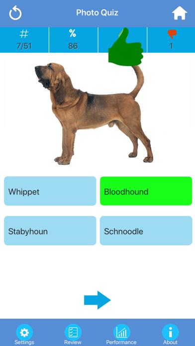 Dog Breeds Quizzes screenshot two