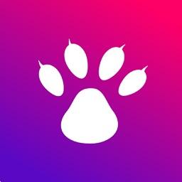 猫熊-游戏社交技能分享服务平台