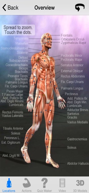 Learn Muscles Anatomy On The App Store