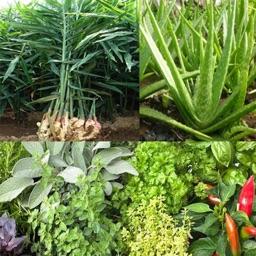 Medicinal plants for health