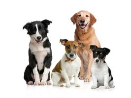 Voici enfin d'incroyables autocollants des plus beaux chiens de France dans votre iPhone