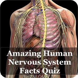 Nervous System Facts Quiz 3000