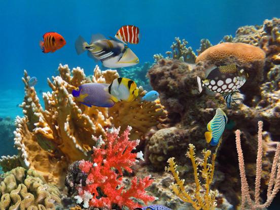 MyReef 3D Aquarium 2 HD screenshot