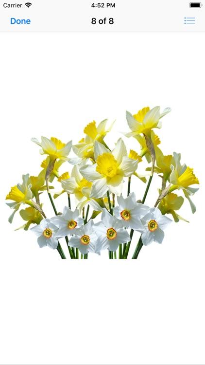 Daffodil Sticker Pack screenshot-8