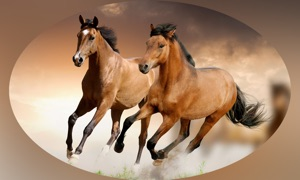Horse Matching Puzzle