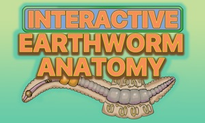 Earthworm Anatomy