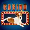 Lucky Pup Wild Casino
